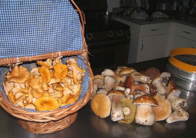 Fall Harvest ...mmmhhh