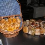QCI Harvest